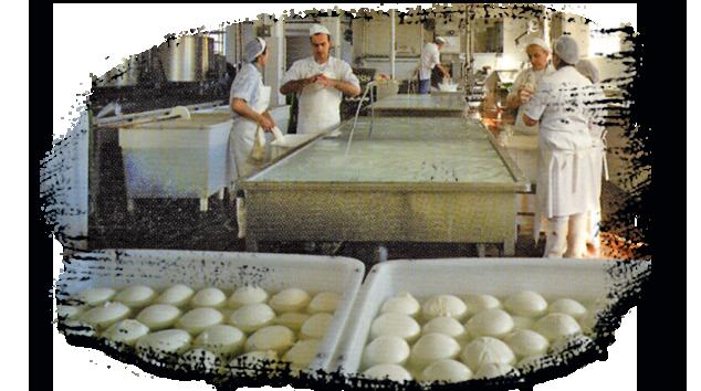 Laboratorio di produzione formaggi